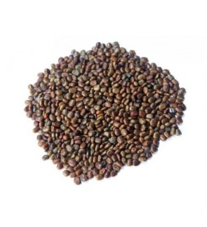 Centrosema Pubescens Cover Crop Seeds