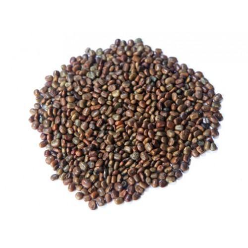 Centrosema Pubescens Cover Crop Seeds